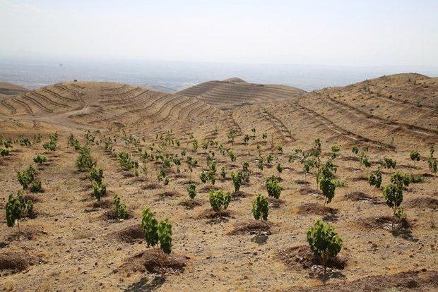اجرای طرح نهضت سبز در روستاها و مناطق بیابانی دهلران