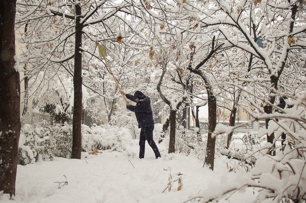 بارش سنگین برف در کرج به ۵۰ درخت آسیب زد