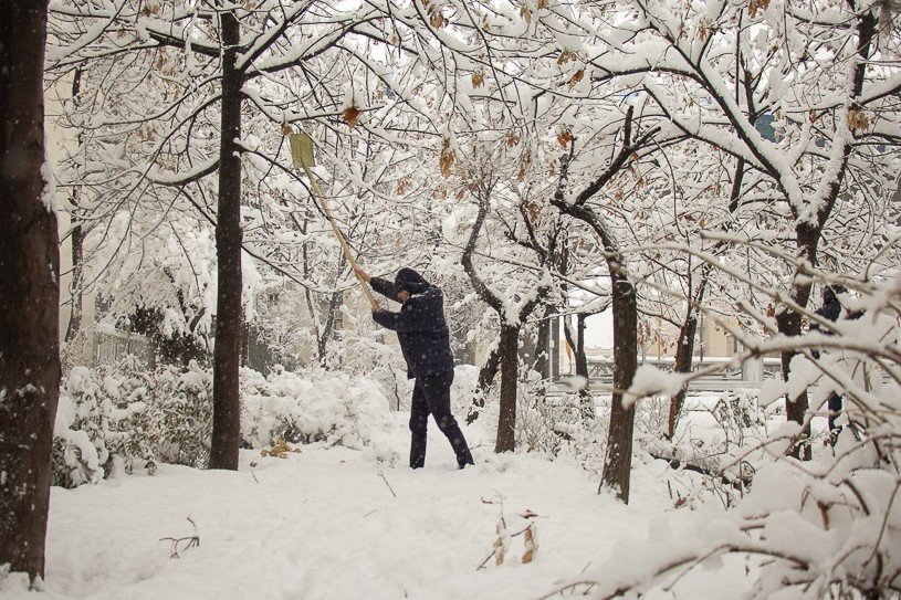 برف تکانی درختان کرج با ۳۰۰ نیرو/اهمیت همکاری شهروندان - 3