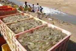 آبزیپروری در استان بوشهر تقویت شود/ استفاده از ظرفیت خلیج فارس