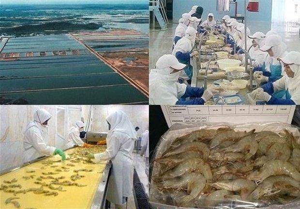 موافقتنامه کنسرسیومهای صادراتی خوشه صنعتی آبزیان بوشهر منعقد شد