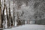 خوشحالی مردم از اولین برف زمستانی/ بارش ها تا فردا ادامه دارد