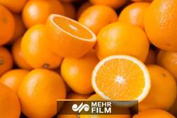 دلیل افزایش قیمت پرتقال چه بود؟