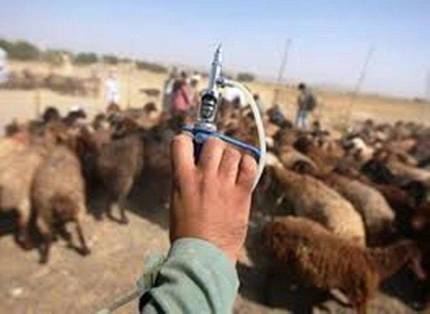شش میلیون نوبت مایه کوبی در استان کردستان انجام شد