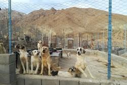 رفع نواقص نقاهتگاه سگ های بدون صاحب کهریزک تا ۱۰ روز آینده