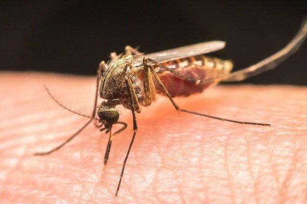 افزایش بیماریهای ناشی از نیش پشه با تشدید تغییرات اقلیمی