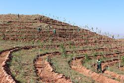 اختصاص ۷۶۰۰ هکتار از اراضی شیب دار لرستان به کاشت نهال