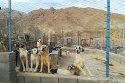 مرکز نگهداری سگهای بلاصاحب در فردیس احداث میشود