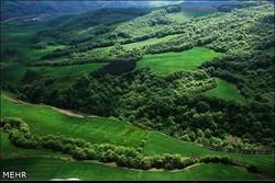۱۹ درصد کل مساحت جنگل های هیرکانی در گیلان قرار دارد