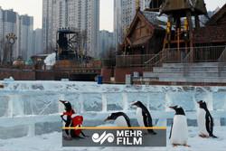Çin'de Buz Festivali zamanı