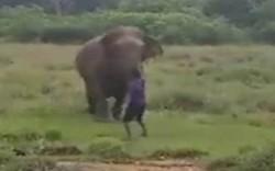 سری لنکا میں ہاتھی کو ہیپناٹائز کرنے والا شخص ہلاک