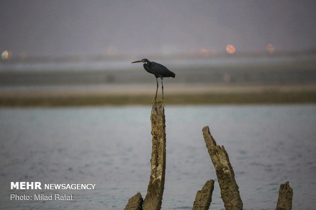 جنة الطيور المهاجرة في ايران