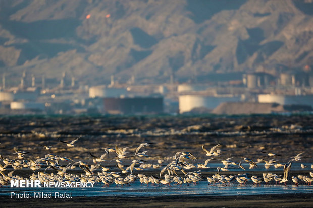 Paradise of migratory birds in southern Iran