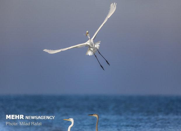 بهشت زمستانی پرندگان مهاجر در ایران
