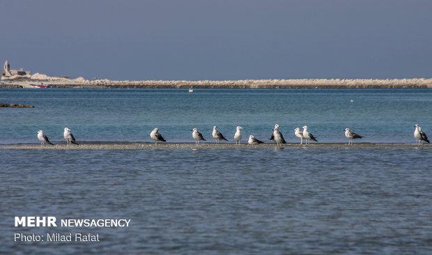 İran; göçmen kuşların kış durağı