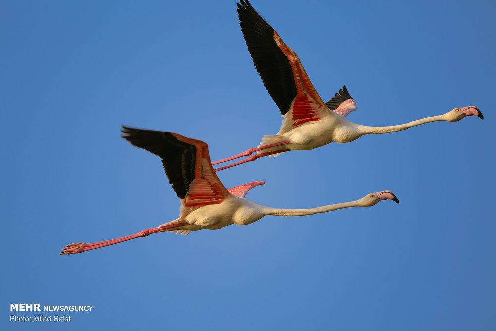پارک ملی دریایی نایبند ، بهشت زمستانی پرندگان مهاجر در ایران