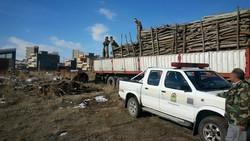 ۱۸ تن چوب قاچاق در اهر کشف شد