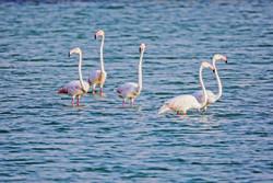 Nayband National Sea Park