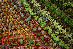 نهمین نمایشگاه گل و گیاه در قزوین برگزار می شود