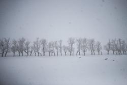 آغاز بارش برف در ایلام/ آماده باش اکیپ های برف روبی