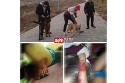 حمله «سگهای یک آقازاده» به دختربچهای در پارک