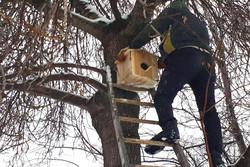 نصب ۵۰ آشیانه پرندگان در خلخال/ زمستان برای حیوانات آسان میشود