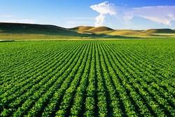 ۱۲ محصول جدید در جنوب کرمان تولید شد/ لزوم حمایت از بخش کشاورزی