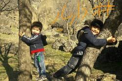 پویشهای مردمی برای حفظ محیطزیست/ «داریار» حامی بلوطهای زاگرس شد