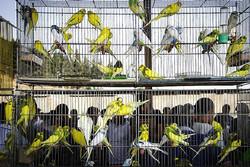 برخورد با فروشندگان پرندگان وحشی تشدید میشود