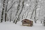 بارش برف در شهرستان «سلسله»