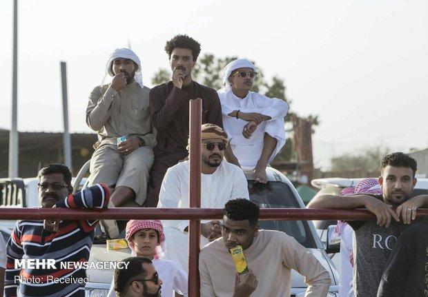 گاوبازی در امارات