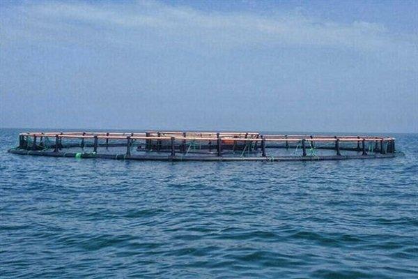 پرورش آبزیان در دریا کلیدی برای توسعه است