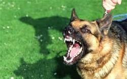 Belediye köpeklerin havlamasını yasakladı
