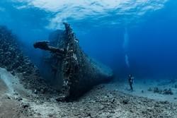 """الصور الفائزة بجائزة """"فن التصوير تحت مياه المحيطات"""" لعام 2018 / صور"""