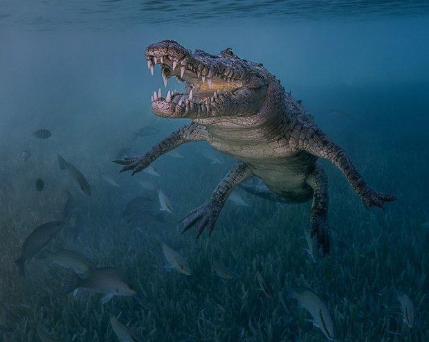 فن التصوير تحت مياه المحيطات