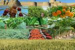 دشت قزوین پس از انقلاب اسلامی به قطب کشاورزی کشور تبدیل شده است