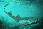 دندان های کوسه ۶۷ میلیون ساله کشف شد