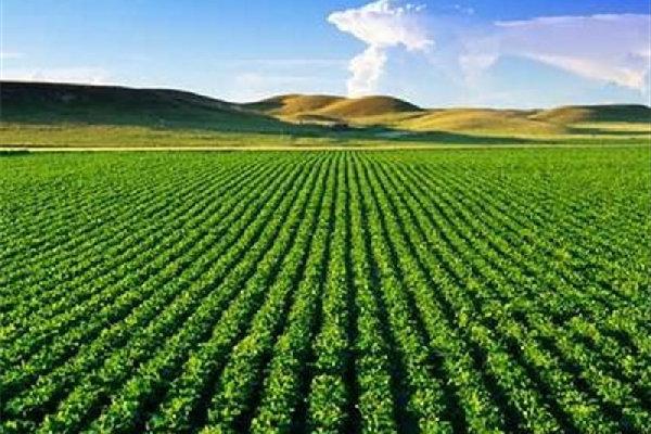 لزوم آماده سازی دستگاههای ضدتگرگ/کشاورزان محصولات خودرا بیمه کنند