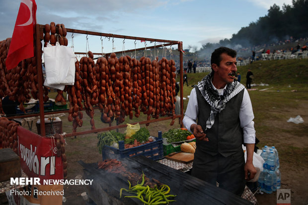 جشنواره مبارزه شترها در ترکیه