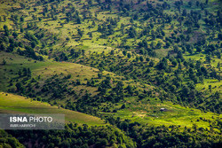 Silent death: Zagros Mountains forest plagued by deforestation, degradation