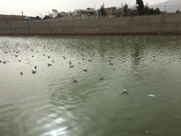 لزوم تسریع در بررسی و اعلام علت تلفات پرندگان مهاجر
