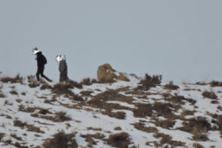 ۲ شکارچی متخلف در آوج دستگیر شدند