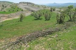 رفع تصرف ۱۷۰۰ متر مربع از اراضی دولتی در استان همدان