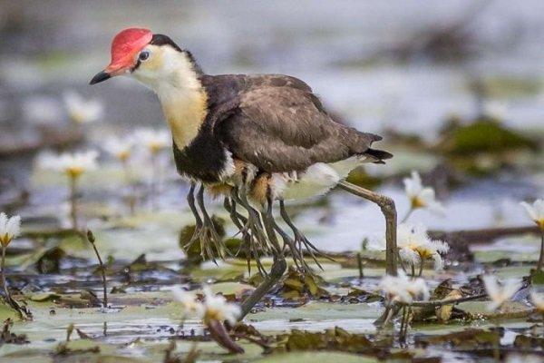 ۳۳ گونه جانوری خراسان رضوی در خطر انقراض قرار دارند