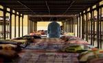 راهاندازی کمپ ماده ۱۶ در زنجان از ضروریات است