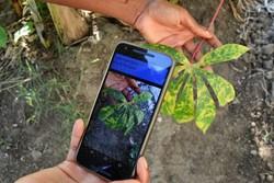 Bitki hastalıklarını tespit eden uygulama
