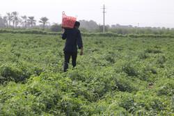 اعضای کمیسیون کشاورزی و منابع طبیعی مجلس وارد میناب شدند