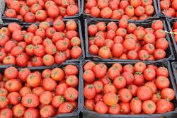 کاهش قیمت گوجه فرنگی و پیاز/موز ١٠٠٠ تومان ارزان شد