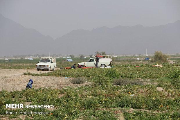 وضعیت راه و برقرسانی در بخش کشاورزی تنگستان بهبود مییابد