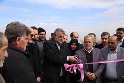 بهره برداری از طرح داربستی ۱۷ هکتار باغ انگور در قزوین آغاز شد